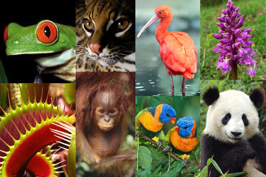 Biológiai sokféleség nemzetközi napja - Délnyugat Krónika